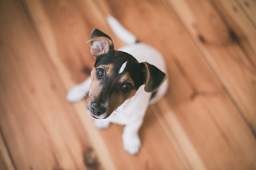 Things to Consider Before Bringing Home a Puppy - Beacon on 5th